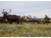 2008-jamal-nomaden-8